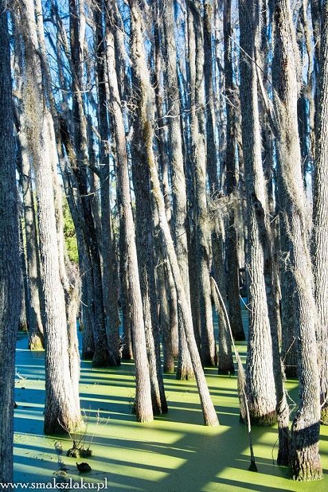 Plantacja Magnolii, Bagna